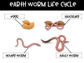 Worm Science Study Posters (Growing Bundle)