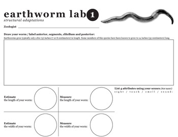 Earthworm Study: Structural and Behavioral Adaptations
