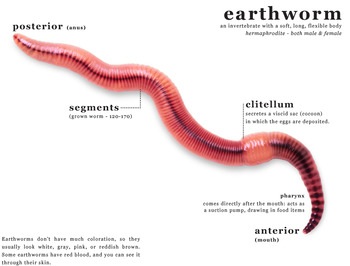 earthworm study structural and behavioral adaptations by e is for
