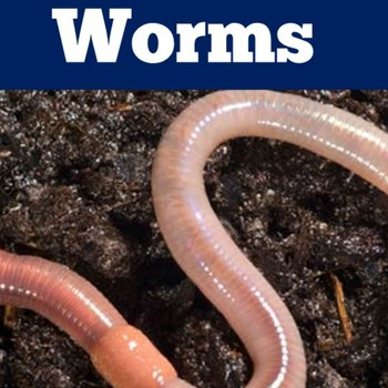 Worms PowerPoint