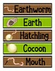 Worms/Composting Kit with Curriculum Connections (pdf)