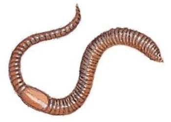 Worms (Earthworms, Flatworms, Nematodes) AS Section 2, unit 2