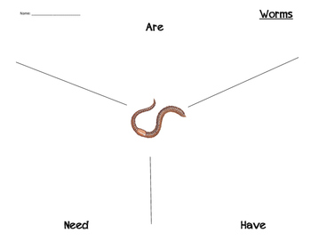 Worms: What are they? What do they need? What do they have?