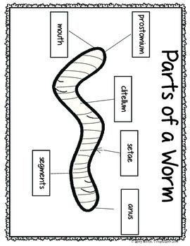 Wormy Worm Unit Resources