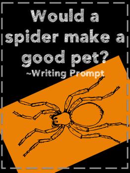 Would a spider make a good pet?