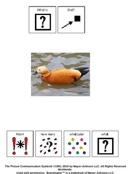 Wow, it's a ___  - An adapted book on identifying color, number and animal