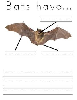Write About Bats