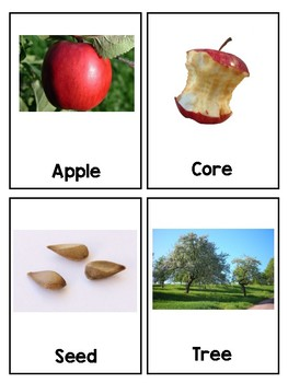 Write About It Vocabulary: Apples