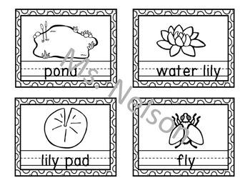 Write the Room Frog Life Cycle and Pond Features