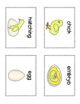 Write the Room: Hatching Chicks
