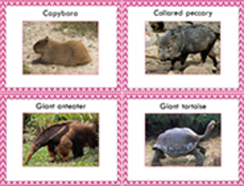 Write the Room with Animals of South America!