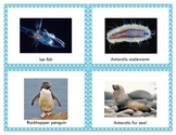 Write the Room with animals of Antarctica