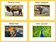 Write the Room with animals of Asia!