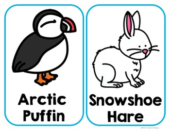 Writing About Arctic Animals