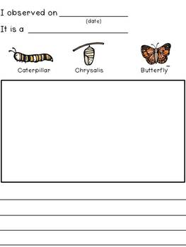 Writing About Butterflies {Mini Unit}
