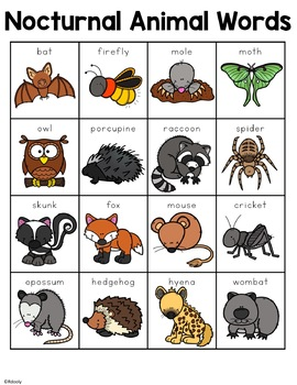 Nocturnal Animal Words