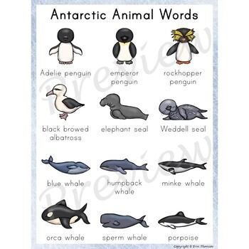 Writing Center Word List ~ Antarctic Animal Words