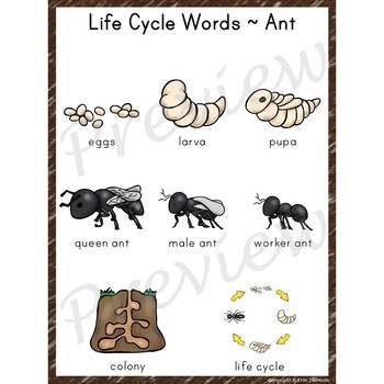 Writing Center Word List ~ Life Cycle Words {Ant}