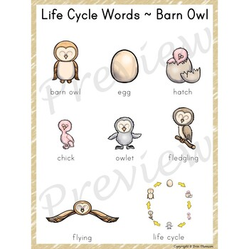 Writing Center Word List ~ Life Cycle Words {Barn Owl}