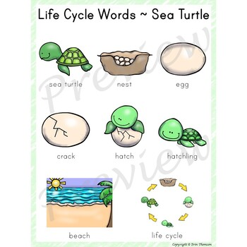 Writing Center Word List ~ Life Cycle Words {Sea Turtle}