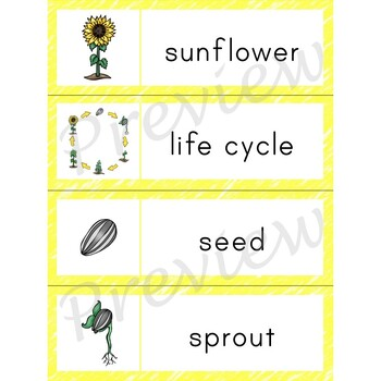 Writing Center Word List ~ Life Cycle Words {Sunflower}