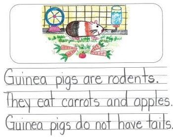 Genre Variety Mega Pack: Visual Writing Rubrics for Kindergarten