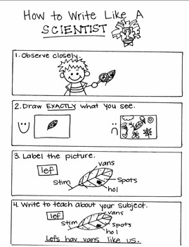Writing Like a Scientist Mini Anchor Chart