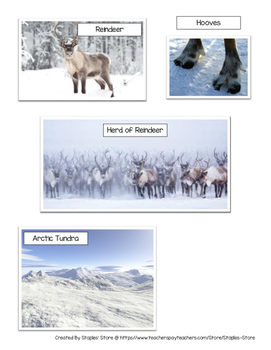 Writing Prompt - Christmas Expository Writing Prompt on Reindeer