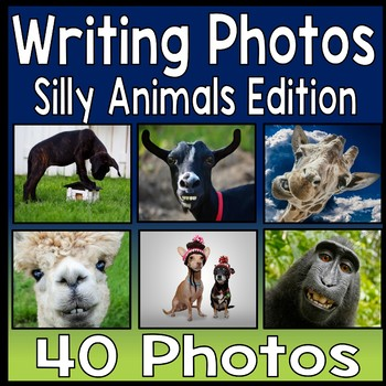 Writing Prompt Photos - 40 Funny Animal Writing Photo Prompts
