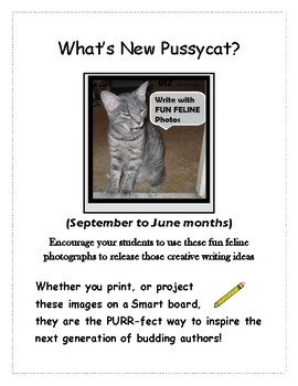 Writing Prompts: What's new Pussycat? Fun Feline Photos