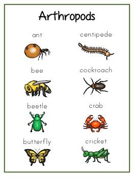 Writing Word File Folder - Arthropod Animal Thematic Folder - Picture Word Wall