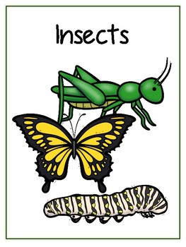 Writing Word File Folder - Insect Animal Thematic Folder - Picture Word Wall