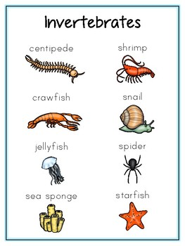 Writing Word File Folder Invertebrate Animal Thematic Folder - Picture Word Wall