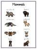 Writing Word File Folder - Mammal Animal Thematic Folder - Picture Word Wall
