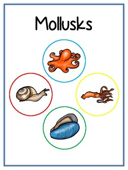 Writing Word File Folder - Mollusk Animal Thematic Folder - Picture Word Wall
