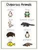 Writing Word File Folder - Oviparous Animal Thematic Folder - Picture Word Wall