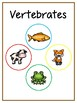 Writing Word File Folder - Vertebrate Animal Thematic Folder - Picture Word Wall