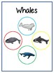 Writing Word File Folder - Whales Animal Thematic Folder - Picture Word Wall
