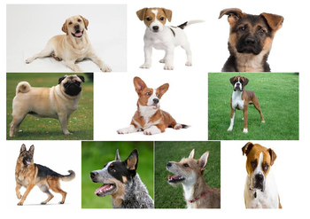 Writing about Dogs