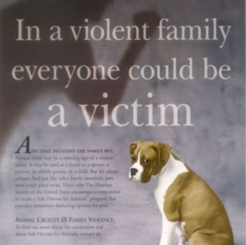 Writing for a Cause - Animal Cruelty  (Crane's Dark Brown Dog)