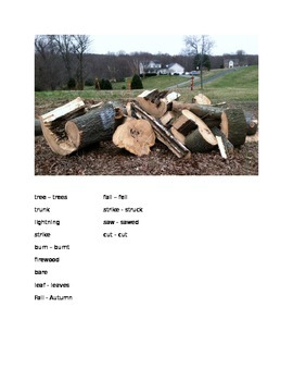 Tree Down By the Way - By the Way ESOL prompt, sub plans