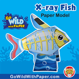 X-Ray Fish Craft Activity | 3D Paper Model