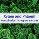 Xylem and Phloem in Plants - Biology Video Guide