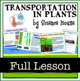 Xylem and Phloem: Transportation in Plants Lesson