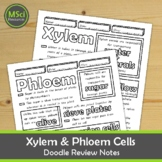 Xylem and Phloem in Plants, Middle School Biology Doodle Notes