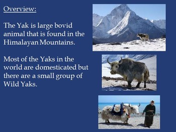 Yak Power Point - Facts History Pictures 9 slides
