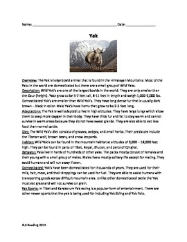Yak Review Article Questions Vocabulary Word Search