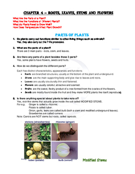 Year 3 Science PARTS OF PLANTS