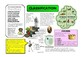 Year 6 Science Knowledge Organisers / Cheat Sheets - Mr A, Mr C and Mr D Present