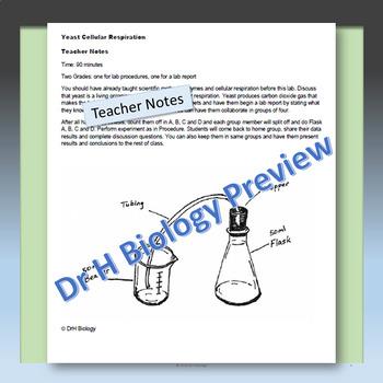 Cellular Respiration: Yeast Lab